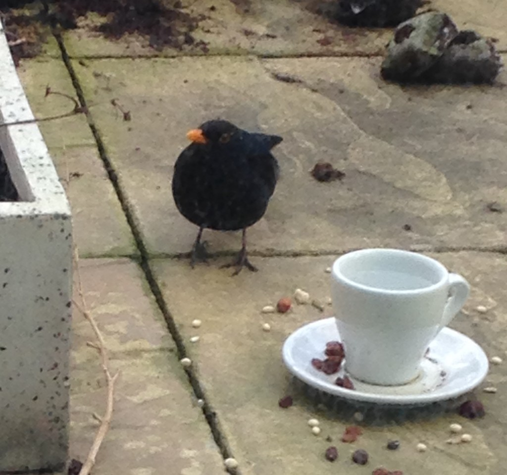 Bird with cup and saucer